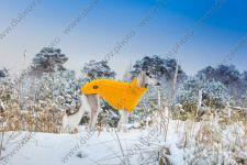 Зимняя фотосъёмка собаки на природе