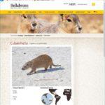 Фотография из фотостока на сайте мюнхенского зоопарка
